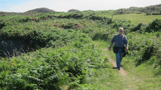 Wales Coastal Path: So green and beautiful