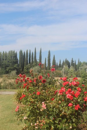 Villa La Massa: Beautiful views
