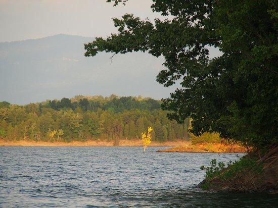 Douglas Lake: Roadrunner tree (sunset)