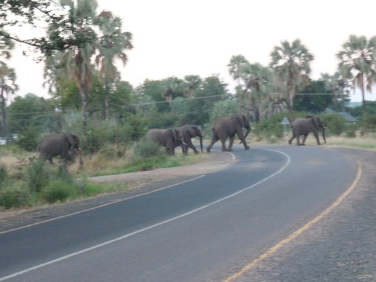 Chrismar Hotel : elefantes cruzando a pista visto da porta do hotel, todo dia é assim.
