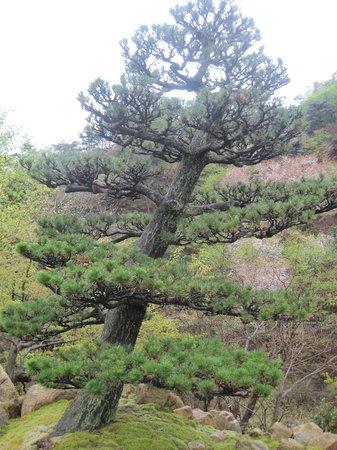 Muragen: Lovely, natural hilltop setting.