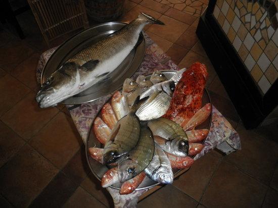 Fertilia, Italia: il nostro pesce fresco del mare di alghero