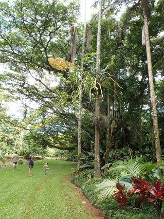McBryde Garden: View in McBryde's Garden