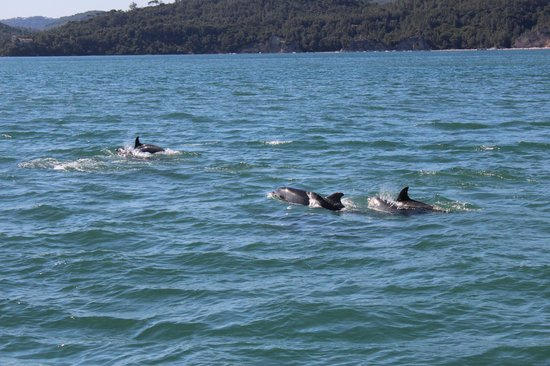 Nautur Observacao de Golfinhos