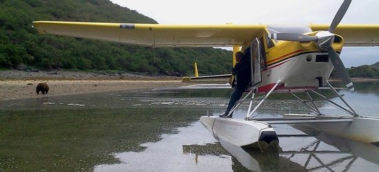 Kingfisher Aviation: Early June bears digging for Clams in Katmai