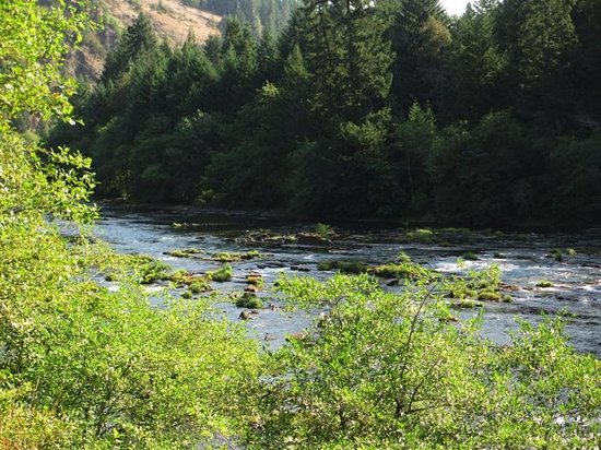 Steamboat Inn: North Umpqua River