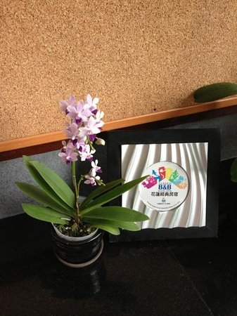 Crossing the Rainbow Bridge Bed and Breakfast : another pretty orchid in the cafeteria