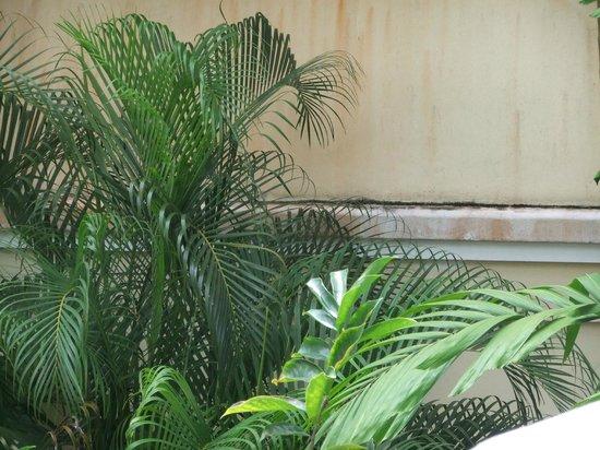 Sofitel Krabi Phokeethra Golf & Spa Resort: Staining, cracks and mould