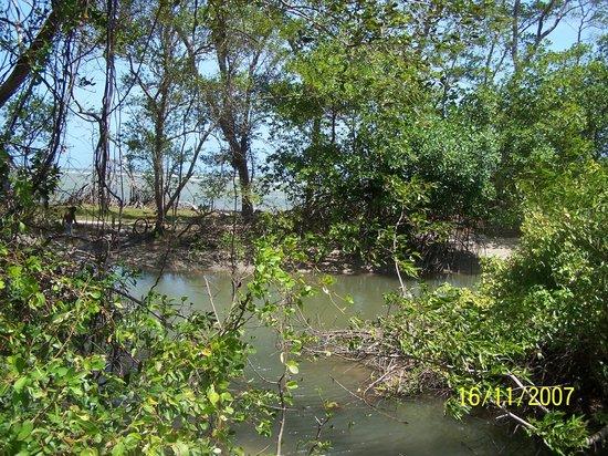 Ilha do Marajo, PA: Igarapé na Pr. Água Boa
