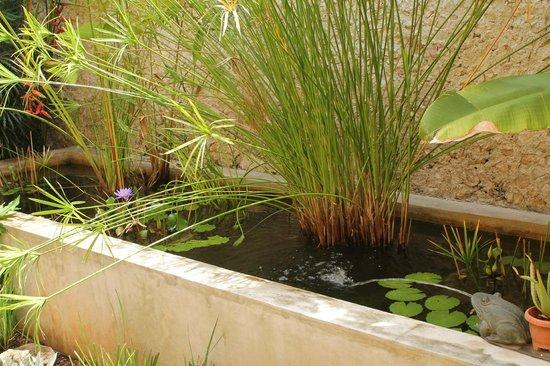 Koox Art 57 Boutique Hotel: Pequeño jardin tropical en el hotel