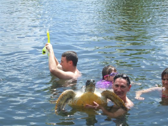 The Savaiian Hotel: swimming with turtles on our tour!!! higlight of the trip