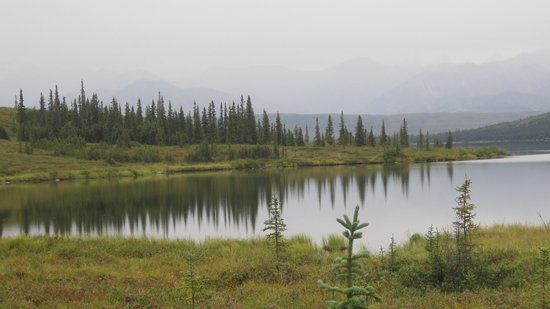 Denali Backcountry Lodge : Wonder Lake