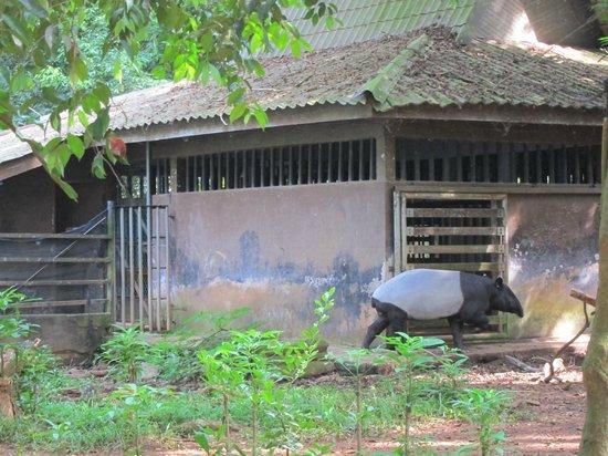 Macaw  Picture of Melaka Zoo and Night Safari Ayer Keroh