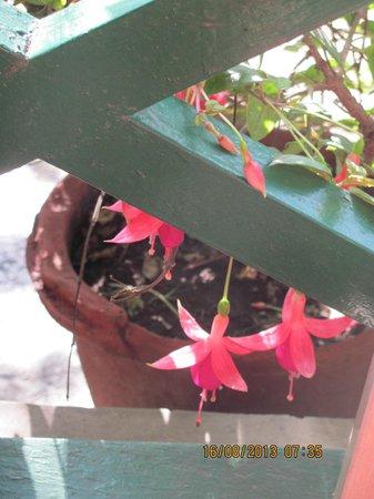 Mystic Mukteshwar Lodge: Hotel Garden