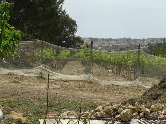 Ta' Mena Estate: Animals working in the vineyards
