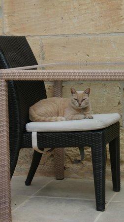 B&B Dar Ta' Zeppi : Nos amis les chats
