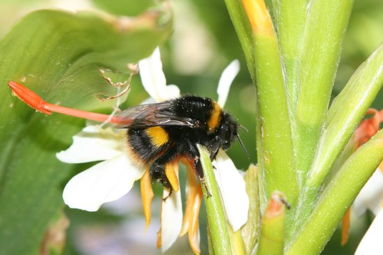 Ventnor Botanic Garden: The bees loved it