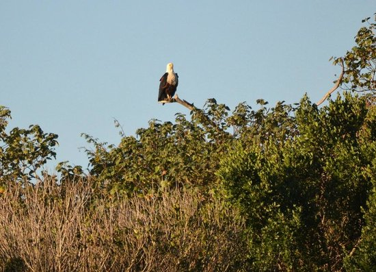 St Lucia Tours & Charters: Fish Eagle