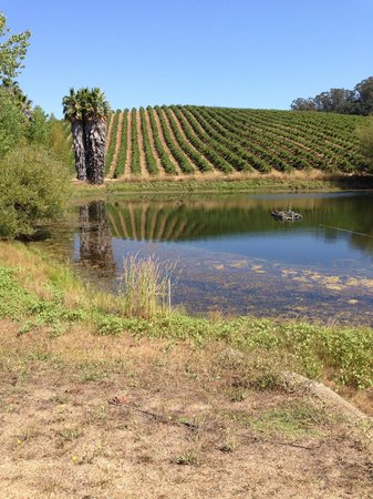 Beau Wine Tours - Sonoma: Truchard