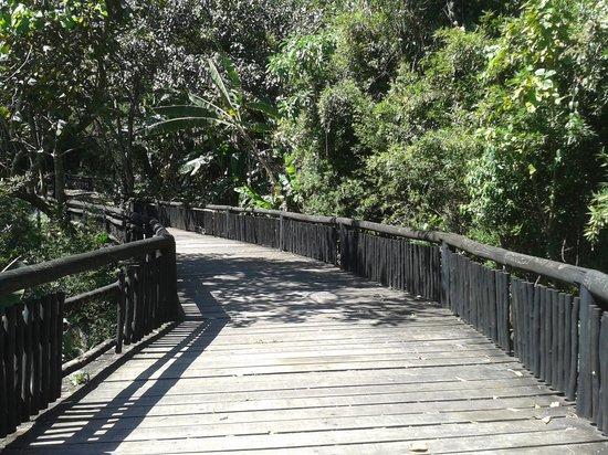 Osasco, SP: Ponte na mata nativa