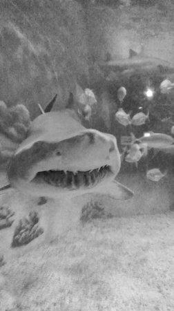 Jenkinson's Boardwalk : Jenkinson Aquarium
