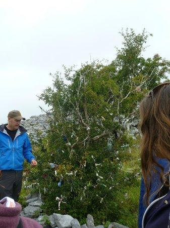 Burren Wild Tours: Cousin John and the fairy tree