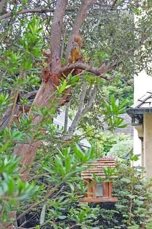 Edgemere Cottages: The squirrel watching us while having breakfast in the dining room