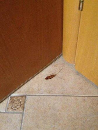 La Strada Suites: cockroach!