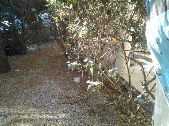 Residence & Hotel Arcadius : vegetation????