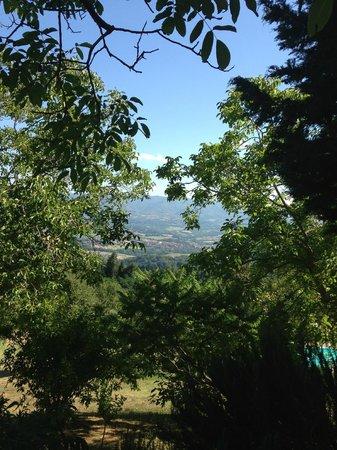 Villa Campestri Olive Oil Resort: View from hotel