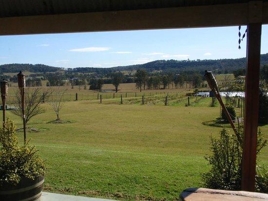 Bluebush Estate: the backyard