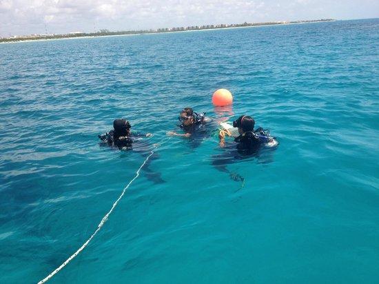 Vida Aquatica Dive Center: Le grand moment...