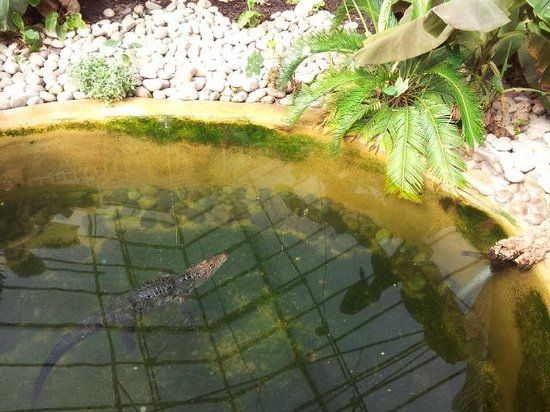Tropical World : Crocodile