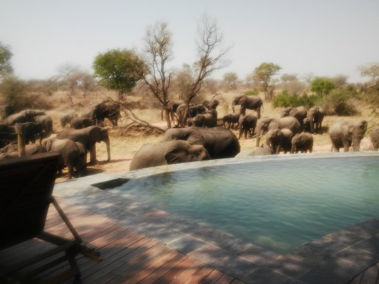 Royal Legend Safari Lodge & Spa: The Elephants join you for breakfast