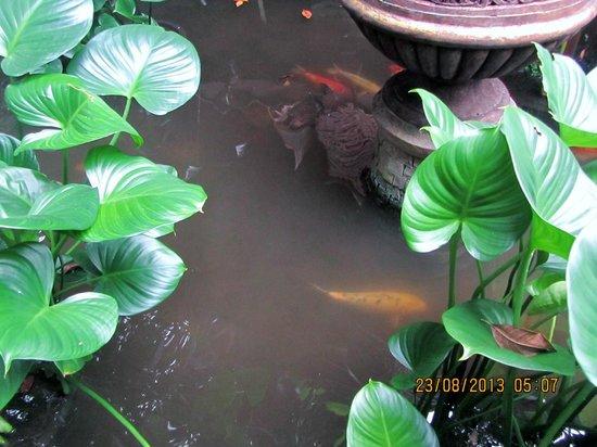 Sawasdee Village: Mini pool
