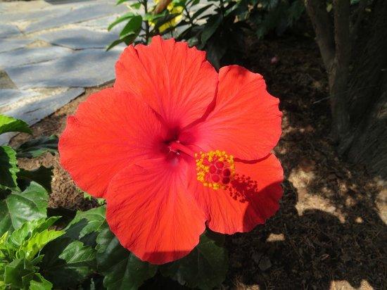 Minigolf Greens : Hibiscus