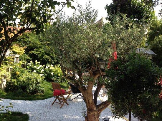 Le Clos des Colombes: l'olivier dans le jardin