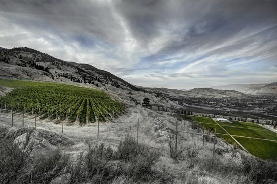 Culmina Family Estate Winery: View of Margaret's and Arise Bench