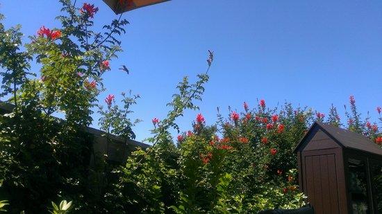 Ventana Big Sur, an Alila Resort: Humming bird