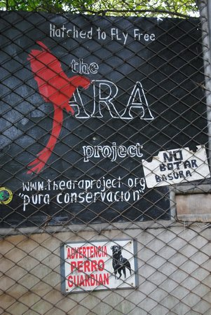 The Ara Project