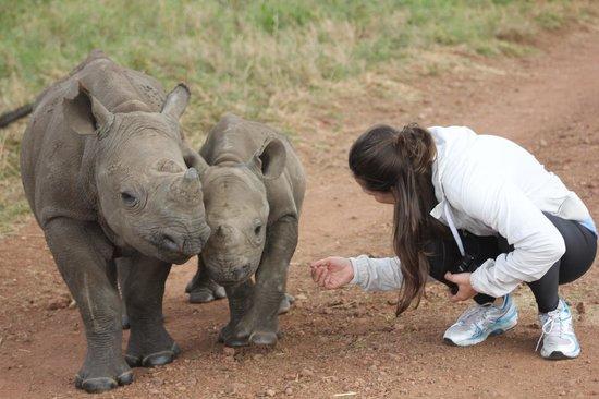 Lewa Safari Camp: Baby Black Rhinos