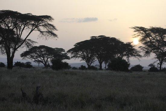 Lewa Safari Camp: Sunset on Safari