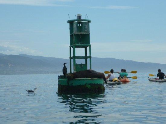 Santa Barbara Adventure Company: Outer Marina Buoy