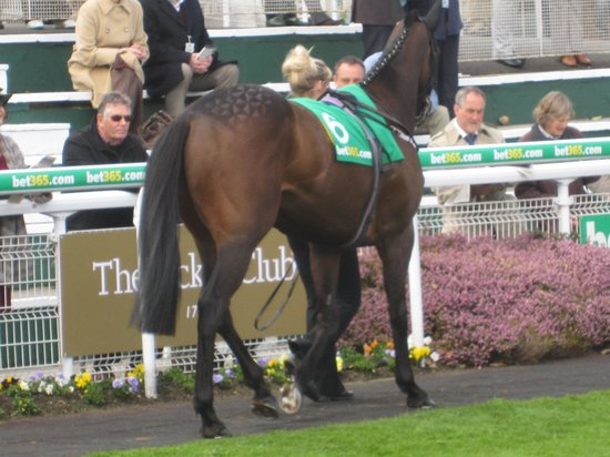Sandown Park Racecourse: parade ring/stand my ground