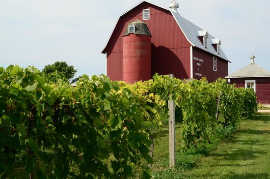 Lautenbach's Orchard Country: From the vineyards