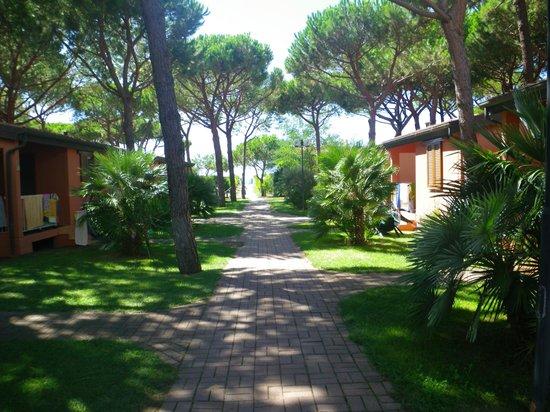 Argentario Camping Village: vialetto verso le piscine
