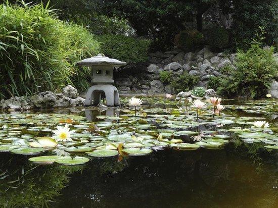 Asian Gardens - Picture of Zilker Botanical Garden, Austin - TripAdvisor