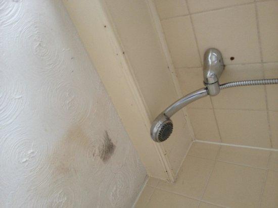 Gwesty Fairy Falls Hotel: Mould in bathroom