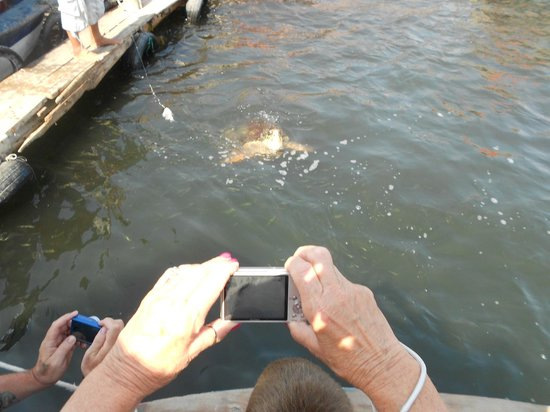 Pioneer Travel -Day Tours: Stopping to feed the turtles!