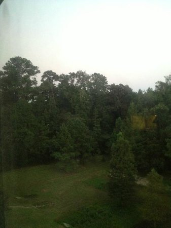 Homewood Suites Tallahassee: View from livingroom